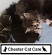 chester Cat Care